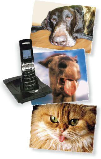 Mobilfunk: Tiere leiden auch