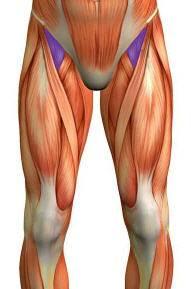 Quelle: Dr. Gumpert Anatomie