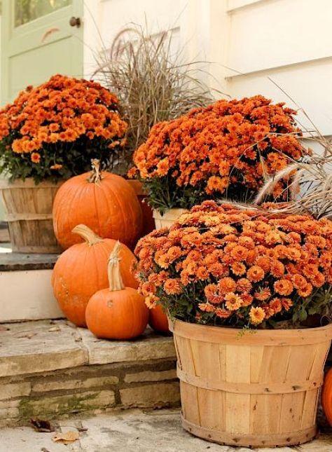 halloween fleurs 3