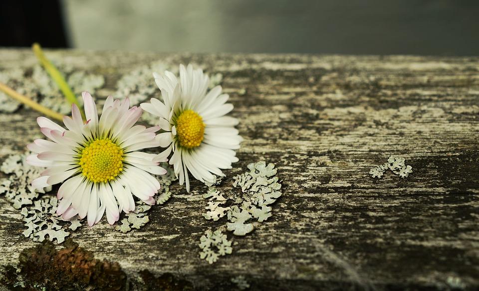 bois fleurs
