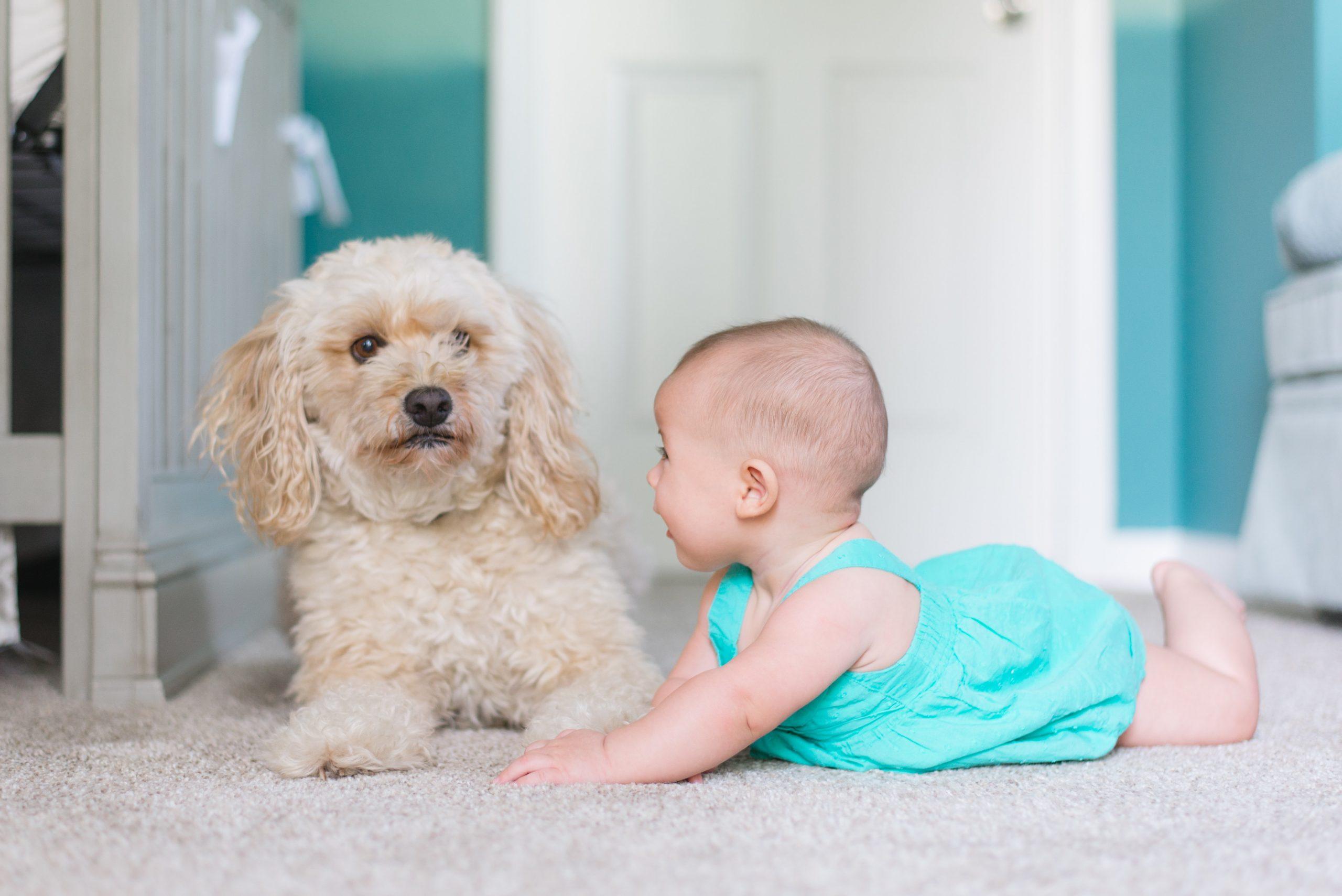 Votre enfant grandit en sécurité avec la complicité de son fidèle compagnon.