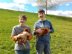 Hühner und Kinder beim Urlaub auf dem Bauernhof