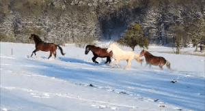 Pferde Schnee Homepage