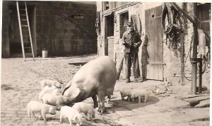 ferienbauernhof Zeltnerhof, Schweinefamilie