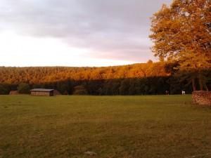 Herbstwald, Zeltnerhof, Bauernhofurlaub