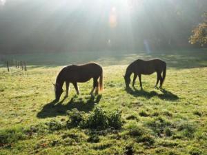 Pferde, Bauernhof, Zeltnerhof