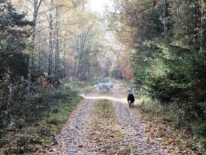 Spaziergang, Herbst, Bauernhof, Zeltnerhof