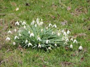 Frühlingsblume, Ferien auf dem Bauernhof, Zeltnerhof