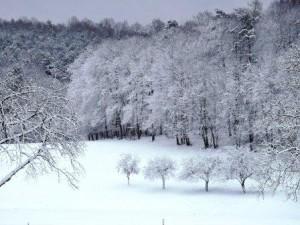 Schnee, Winter, Weihnacht, Ferien auf dem Bauernhof, Zeltnerhof