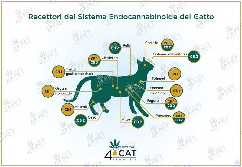 Illustrazione-recettori_CAT-FILIGRANA