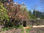 Spring Garden. Jampa Ling. May 2016.