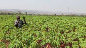 Cassava Farming best business to start