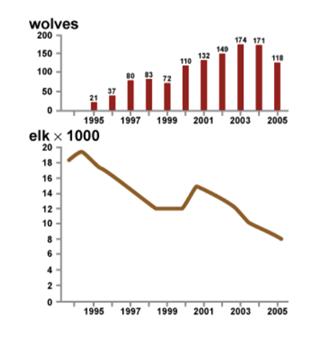wolves-vs-elk