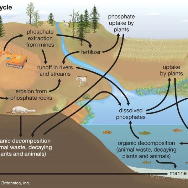 siklus fosfor