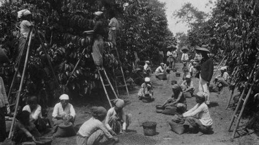 Foto Tanam Paksa oleh Belanda di Hindia Belanda Indonesia