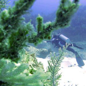 Scuba diving in Punta Cana, Dominican Republic | Dressel Divers