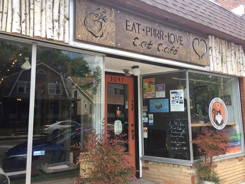 Eat Purr Love - Cat Cafe in Columbus, OH | Ohio Travel | USA Travel