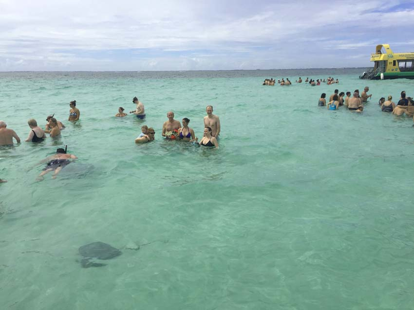 Swimming with stingrays in Grand Cayman | Stingray City Grand Cayman | Royal Caribbean Excursion | Swim With Stingrays | Things To Do In Grand Cayman