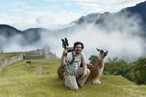Llamas roam Machu Picchu now
