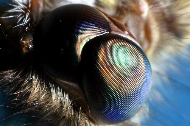 Moth eye does not reflect light   Zenni Optical