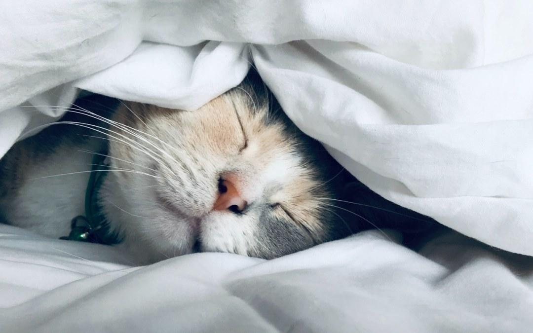 Le sommeil des français  : bon ou mauvais ?