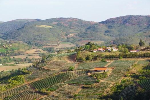 Winery and rolling hills Samaipata Bolivia