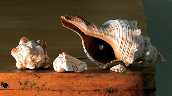 How to minimize your environmental impact - souvenirs