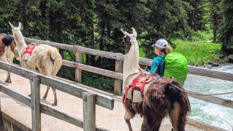 Yellowstone Trek with Llama