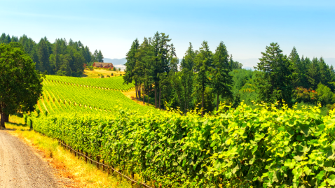 Oregon Multisport Wine Adventure
