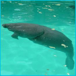Miami - Manatee Rescue