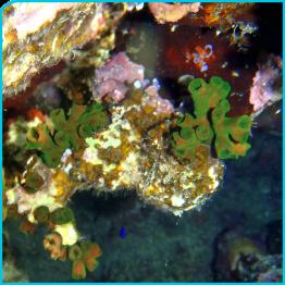 Unterwasser Hausriff