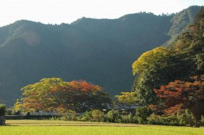 秋の山の紅葉