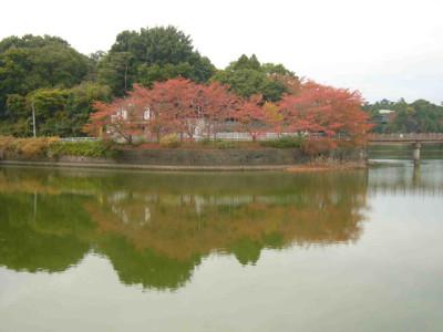 秋の紅葉と大きな池