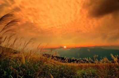秋のすすきと夕日