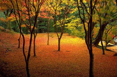 秋の紅葉と落ち葉のじゅうたん