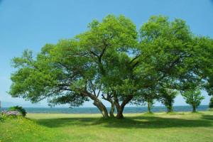 初夏の海と大きな木