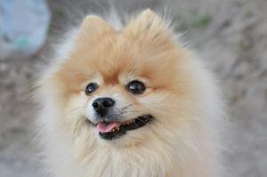 可愛い犬の写真