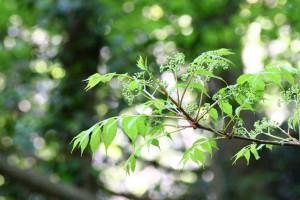 初夏の緑の木々