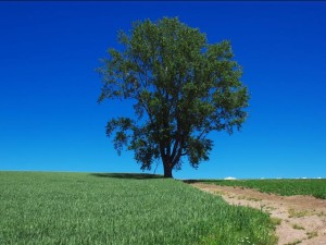 初夏の丘と緑の芝生と大きな木