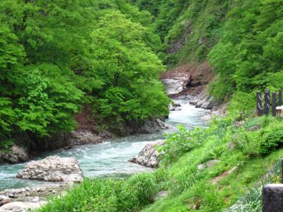 夏の川と緑の渓谷