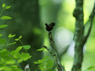 夏の森の風景、小鳥と共に!