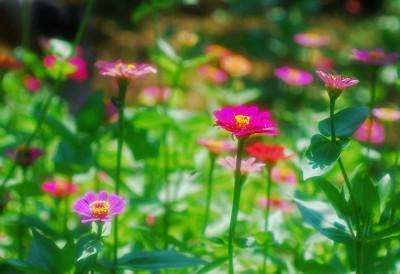 夏のカラフルな花々