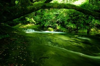 夏の癒しの森林