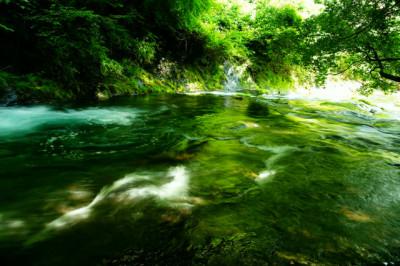 夏の癒しのせせらぎと緑の木々