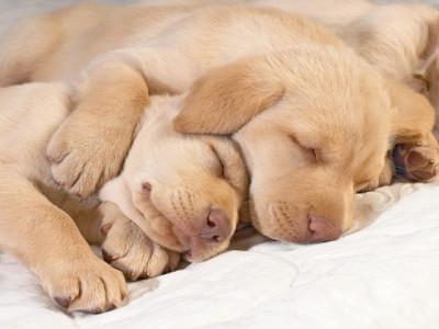 心地よい眠り