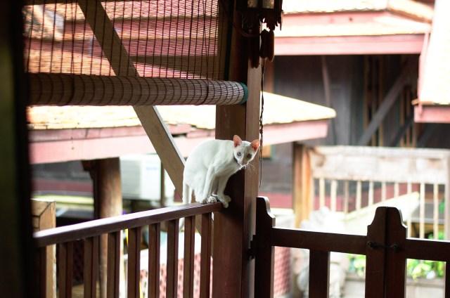 Thailand_DSC_9982