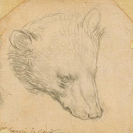 Testa d'orso di Leonardo all'incanto per 9 – 13 milioni