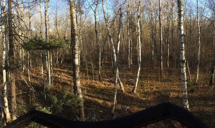 tree stand hunting