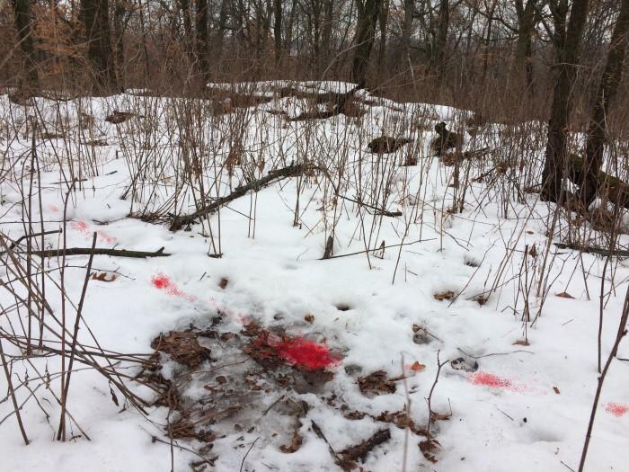 blood trailing deer