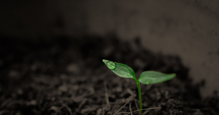 Becoming the Good Soil: Increasing Soil Carbon Will Increase Crop Yields